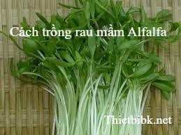Cach dung may lam gia do de trong rau mam Alfalfa
