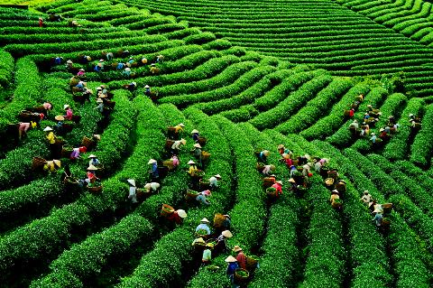 Du lich Bao Loc Kinh nghiem cho ai muon di phuot day